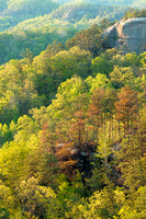 Auxier Ridge Overlook, Red River Gorge, Daniel Boone National Forest, Kentucky