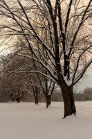 Snowy Trees at Dusk, Churchill Woods Forest Preserve, Illinois