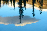 Reflecting Pools Reflections, Kootenay Plains, David Thompson Country, Alberta