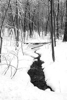 East Woods in Winter, Black & White, Morton Arboretum, DuPage County, Illinois