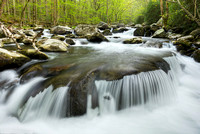 Smokies Spring: Tremont, Tennessee