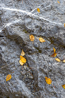 Aspen Leaves and Rock Cracks, Fireside Picnic Area, Banff National Park, Alberta