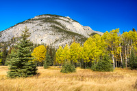 Aspen Meadow, Banff Airstrip, Banff National Park, Alberta
