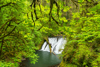 Lower North Falls, Silver Falls State Park, Oregon