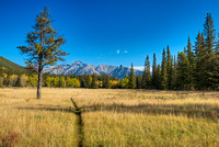 Morning Meadow, Banff Airstrip, Banff National Park, Alberta