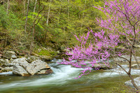 Smokies Spring: Trees & Fowerscapes, Tennessee & North Carolina