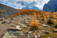 Larch Meadow, Saddleback Pass, Banff National Park, Alberta