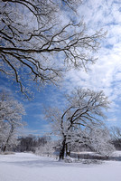 Winter Trees, Churchill Woods Forest Preserve, Illinois