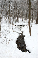 East Woods in Winter #2, Morton Arboretum, DuPage County, Illinois