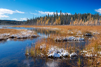 Larch Bog, David Thompson Country, Alberta
