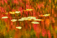 Lily Pads and Reflections, Mill Brook Pond, Franklin County, Maine