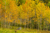 Birches, Essex County, Vermont