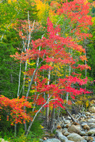 Fall Color Intimate, Crawford Notch, White Mountain National Forest, New Hampshire