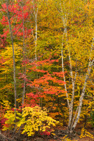 Pinkham Notch Fall Intimate, White Mountain National Forest, New Hampshire