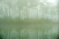 Foggy Morning, Long Pine Lake, Long Pine Key, Everglades National Park, Florida