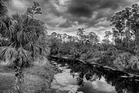 Loxahatchee River Black & White, River Bend Park, Palm Beach County, Florida