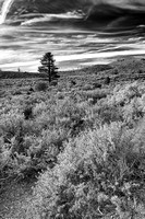 Mono County Morning Black & White, California