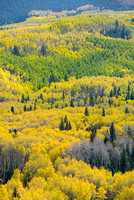 Aspen Overlook, County Road 5, Uncompahgre National Forest, Colorado
