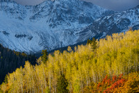 Aspen Light, County Road 9, Uncompahgre National Forest, Colorado
