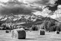 Hay Bales Black & White, County Road 9, Uncompahgre National Forest, Colorado