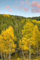 Aspens at Sunset, Old Lime Creek Road, San Juan National Forest, Colorado