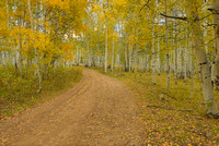 Aspen Road, Kebler Pass, Gunnison National Forest, Colorado
