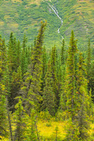 Spruce Mountainside, George Parks Highway, Denali Borough, Alaska