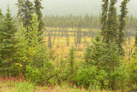 Misty Trees, George Parks Highway, Denali Borough, Alaska