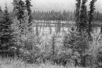 Misty Trees Black & White, George Parks Highway, Denali Borough, Alaska