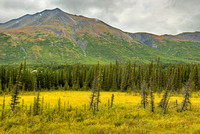 Spruce Meadow, George Parks Highway, Denali Borough, Alaska