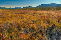 Frosty Meadow, Northern Dalton Highway, Brooks Range, Alaska