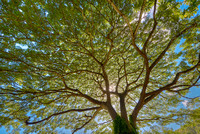 Skyward, MacBryde Garden, National Botanical Garden, Kauai, Hawaii