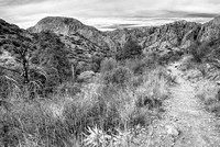Basin Loop Trail Black & White, Big Bend National Park, Texas