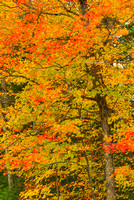 Fall Color, Valley Spur, Hiawatha National Forest, Michigan