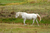 Lone Horse, Santa Fe National Forest, New Mexico
