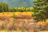 Moose Meadows, Bow Valley Parkway, Banff National Park, Alberta
