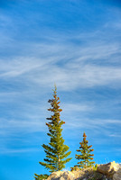 Isolated Conifers, Whirlpool Point, David Thompson Country, Alberta