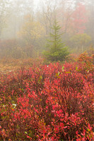 Blackbird Knob Trail, Dolly Sods Wilderness, Monongahela National Forest, West Virginia