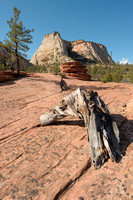The Plateau, Zion National Park, Utah