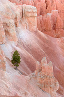 Amphitheater Growth, Bryce Canyon National Park, Utah