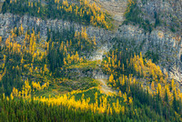Larch Mountainside, Lake Louise, Banff National Park, Alberta