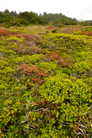 Colorful Heath, Otter Point State Recreation Area, Oregon
