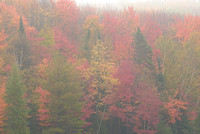 Halfmoon Lake Trees in Fog, Hiawatha National Forest, Michigan