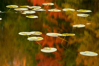 Lily Pads and Reflections, Halfmoon Lake, Michigan