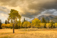 Approaching Storm, Palisades Picnic Area, Jasper National Park, Alberta