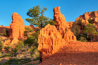 Red Canyon Morning, Red Canyon, Dixie National Forest, Utah
