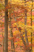 Autumn Trees, Squaw Rock Trail, South Chagrin Reservation, Cleveland Metroparks, Ohio
