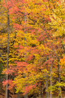 Autumn Trees, Hermits Hollow Picnic Area, Bedford Reservation, Cleveland Metroparks, Cuyahoga Valley National Park, Ohio