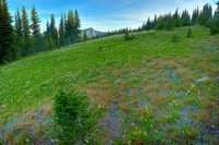 Lily Meadow, Obstruction Point Road, Olympic National Park, Washington