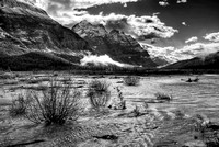 Graveyard Flats Black & White, Banff National Park, Alberta